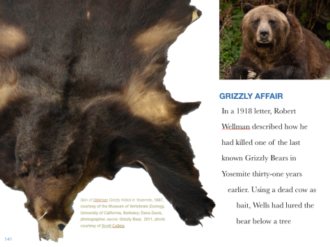 2Grizzly